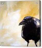 Old Crow Acrylic Print