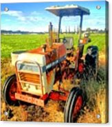Old David Brown Tractor  Acrylic Print