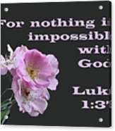 Old Fashion Pink Roses Luke 1 V 37 Acrylic Print