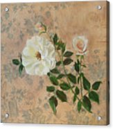 Old Fashioned Rose Acrylic Print