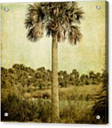 Old Florida Palm Acrylic Print by Rich Leighton