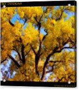 Old Giant  Autumn Cottonwood Orton Acrylic Print