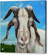 Old Goat - Painting By Cindy Chinn Acrylic Print