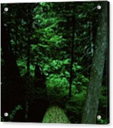 Old Growth Forest At Lost Lake On Mount Hood Acrylic Print