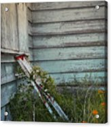 Old Ladder Acrylic Print