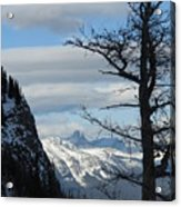 Old Larch Tree Has Best View Acrylic Print