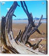 Old Log On Auckland Beach Acrylic Print