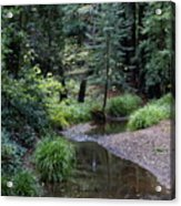 Old Mill Park In Mill Valley 2 Acrylic Print