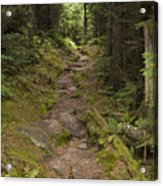 Old Mitchell Trail In Spruce-fir Forest Acrylic Print