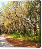 Old Oak Trees And Moss Acrylic Print