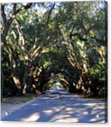 Old Oak Tunnel Acrylic Print