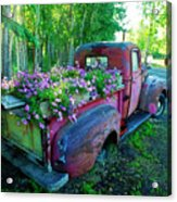 Old Pickup Truck As Flower Bed Acrylic Print
