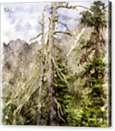 Old Pines Cascades Wc Acrylic Print