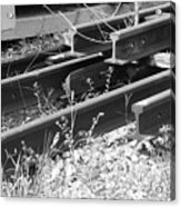Old Rails Acrylic Print
