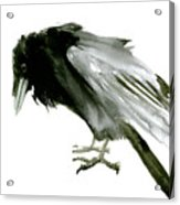 Old Raven Acrylic Print