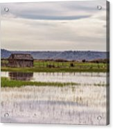 Old Shed On Marsh Acrylic Print
