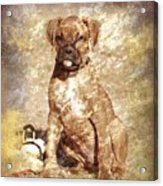 Old Time Boxer Portrait Acrylic Print by Angie Tirado