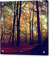 Old Tree Silhouette In Fall Woods Acrylic Print
