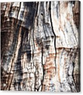 Old Tree Stump Tree Without Bark Acrylic Print