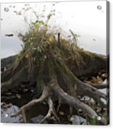 Old Tree Stump With Flowers Acrylic Print