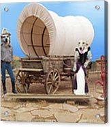 Old West Dogs Acrylic Print