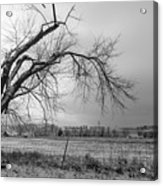 Old Winter Tree Grayscale Acrylic Print