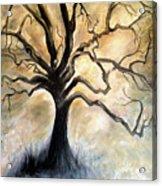 Old Wise Tree Acrylic Print