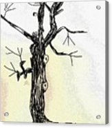 Oldest Tree Acrylic Print