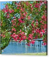 Oleander On Melbourne Harbor In Florida Acrylic Print