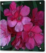 Oleanders In Pink Acrylic Print