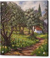 Olive Grove In Spring-time Acrylic Print