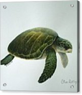 Olive Ridley Turtle Acrylic Print