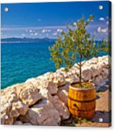 Olive Tree In Barrel By The Sea Acrylic Print
