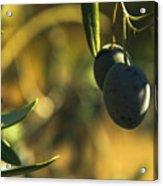 Olives #2 Acrylic Print