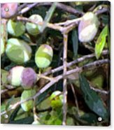 Olives Acrylic Print by Mindy Newman