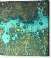 Olowalu Coral Acrylic Print