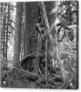 Olympia Rain Forest Acrylic Print