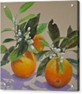 Ombres Fleuries Acrylic Print