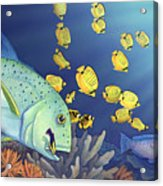 Omilu Bluefin Trevally Acrylic Print