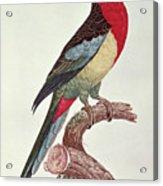 Omnicolored Parakeet Acrylic Print