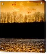 On A Golden Lake Acrylic Print