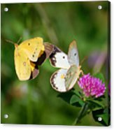 On A Wing And A Prayer Acrylic Print