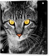 On Cat Watch Acrylic Print