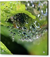 On Drops Of Dew Acrylic Print