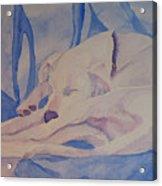 On Fallen Blankets Acrylic Print