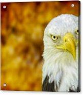 On Fire The American Bald Eagle Acrylic Print