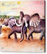 On Safari Acrylic Print