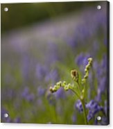 On The Blue Meadow Acrylic Print