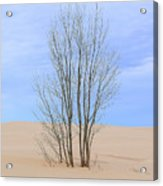 On The Dune Acrylic Print