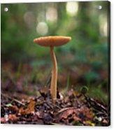 On The Forest Floor Acrylic Print